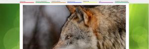 MPS Agentur, Referenzen Kommunikation, Naturpark Schwarzwald Blog, Screenshot Startseite